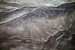 Nazca del mono Foto de archivo libre de regalías