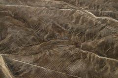 Nazca för flyg- sikt linjer av apan, Peru Arkivfoto