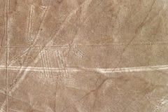 Nazca fodrar hunden Arkivbilder