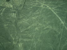 Nazca Lines: The Condor Royalty Free Stock Photography