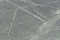 Nazca Lines in the form of a beetle Stock Image