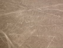 Nazca Lines Monkey Stock Photography