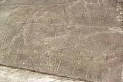 Nazca Lines Pelican Royalty Free Stock Images