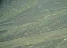 Nazca Lines: Shells Royalty Free Stock Photography