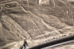 Nazca Lines - Tree fugure Royalty Free Stock Images