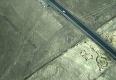 Nazca linie: Jaszczurka zdjęcie stock
