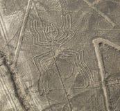 Nazca linie - pająk zdjęcia stock