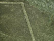 Nazca linie: Wieloryb zdjęcie royalty free
