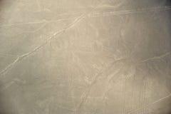 Nazca-Linien - der Affe Stockfotografie
