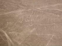 Nazca linjer apa Arkivbild