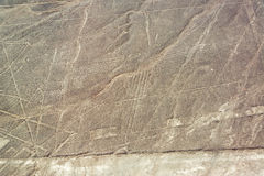 Nazca Wykłada Geoglyphs obraz stock