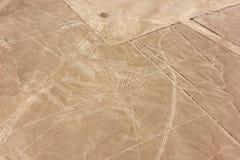 Nazcalijnen van de vliegtuigen - condor stock foto