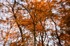Composition of a tree and blurry background in autumn royalty free stock photography