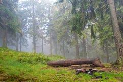 Nazwa użytkownika sosnowy las Fotografia Stock