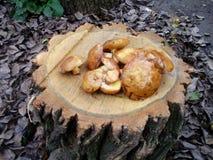 NBrownpaddestoelen in bos op een stomp stock afbeeldingen