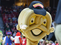 2015 NCAA Basketbal - tempel-ECU Royalty-vrije Stock Afbeelding