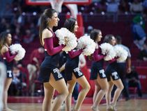 2014 NCAA Basketball - cheer/dance Stock Image