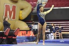 2015 NCAA dam gimnastyki - WVU Obrazy Stock