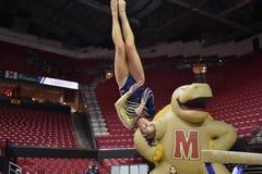 2015 NCAA-Damen-Gymnastik - WVU Lizenzfreies Stockfoto
