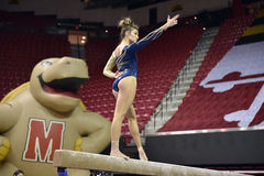 2015 NCAA-Damen-Gymnastik - WVU Lizenzfreie Stockfotos
