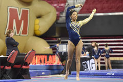 2015 NCAA-Damen-Gymnastik - WVU Stockbilder