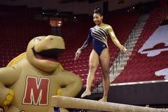 2015 NCAA-Damen-Gymnastik - WVU Stockfotos
