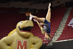2015 NCAA-Damen-Gymnastik - WVU Stockfoto