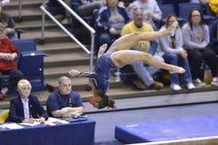 2015 NCAA-Gymnastik - WVU-Pennzustand Stockbilder