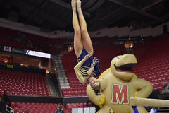 2015 NCAA Ladies Gymnastics - WVU Royalty Free Stock Photo
