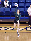 NCAA Volleyball 2014 - Baylor - WVU Stock Images