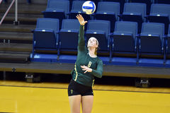 NCAA Volleyball 2014 - Baylor - WVU Stock Photography