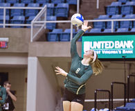 NCAA Volleyball 2014 - Baylor - WVU Royalty Free Stock Photo