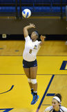 NCAA Volleyball 2014 - Baylor - WVU Royalty Free Stock Photos