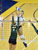 NCAA Volleyball 2014 - Baylor - WVU Royalty Free Stock Image