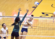 NCAA Volleyball 2014 - Baylor - WVU Royalty Free Stock Images