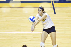 NCAA Volleyball 2014 - Baylor - WVU Stock Photo