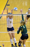 NCAA Volleyball 2014 - Baylor - WVU Stock Image