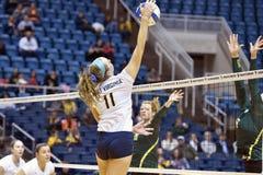 NCAA Volleyball 2014 - Baylor - WVU Royalty Free Stock Photos