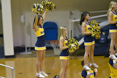 2015 NCAA-Volleyball - Texas @ West Virginia Lizenzfreies Stockbild