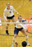 2015 NCAA-Volleyball - Texas @ West Virginia Lizenzfreie Stockfotos