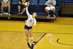 2015 NCAA-Volleyball - Texas @ West Virginia Stockfotografie