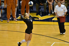 2015 NCAA-Volleyball - Texas @ West Virginia Stockfotos
