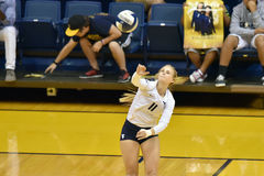 2015 NCAA-Volleyball - Texas @ WVU Stockbilder