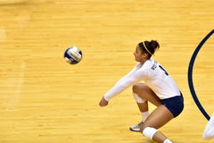 2015 NCAA Volleyball - Texas @ WVU Stock Photo