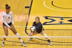 2015 NCAA Volleyball - van West- Texas @ Virginia Stock Foto's