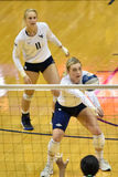 2015 NCAA-volleyboll - Texas @ West Virginia Royaltyfria Foton