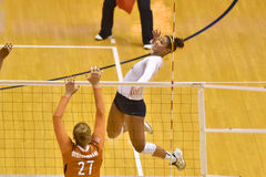 2015 NCAA-volleyboll - Texas @ WVU Arkivfoton