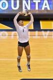 2015 NCAA-volleyboll - Texas @ WVU Arkivbild