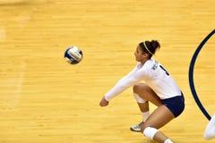 2015 NCAA-volleyboll - Texas @ WVU Arkivfoto