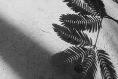 Nch d'ombre des lbraeaves sur le fond concret photos stock